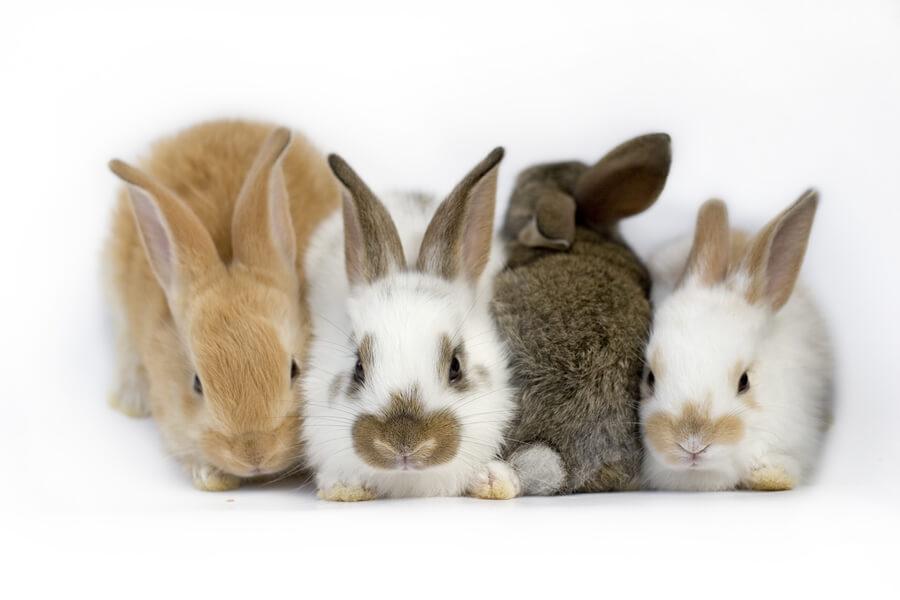 Síndrome vestibular en conejos: ¿de qué se trata?