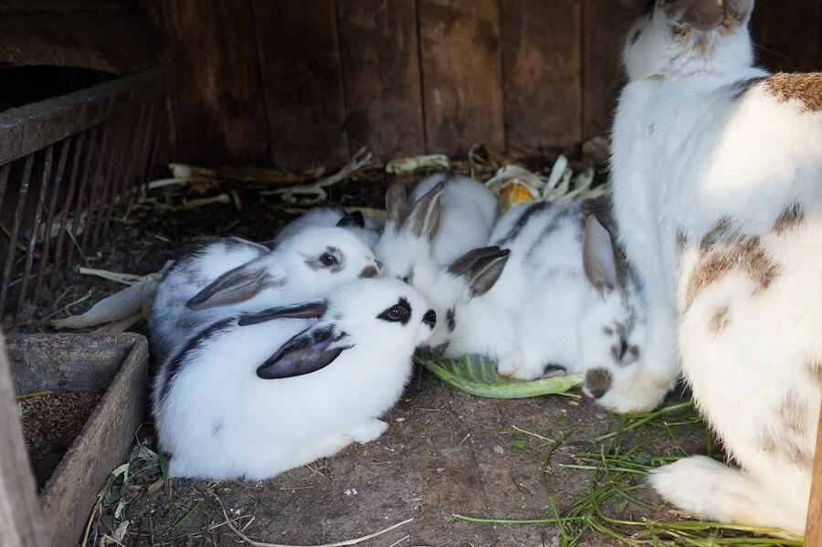 Grupo de conejos jóvenes siendo supervisados por su madre.