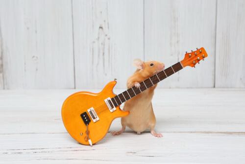 Hámster que simula tocar la guitarra.