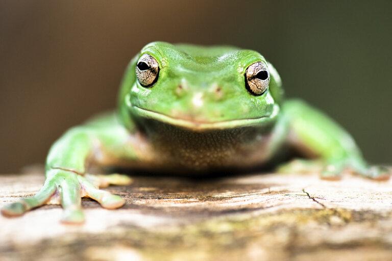 El ciclo vital en anfibios: claves para entenderlo