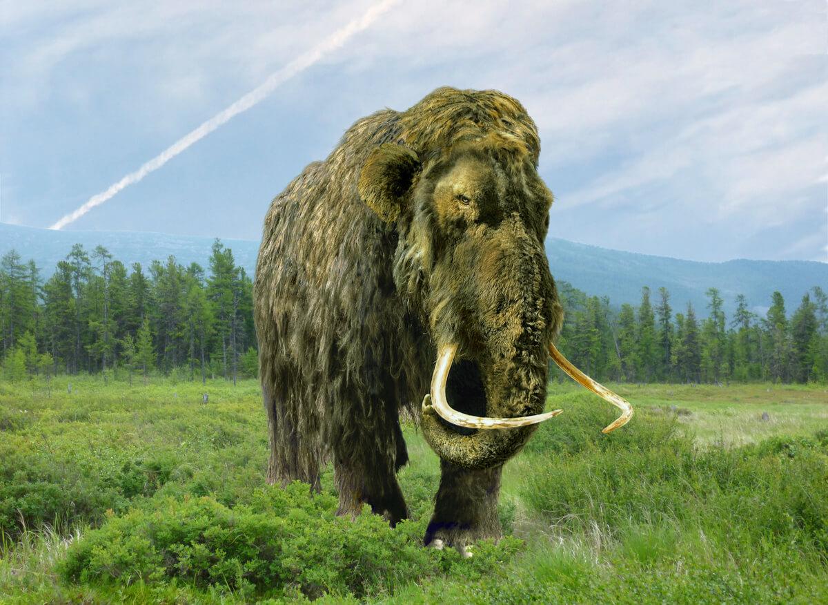 Dibujo de un mamut.