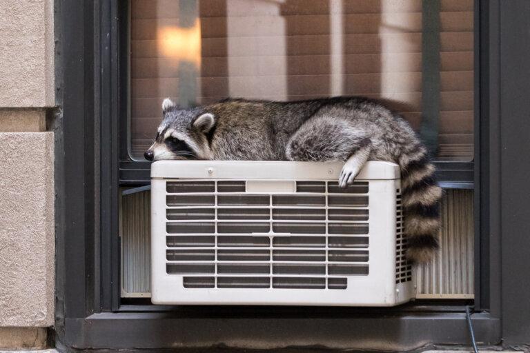 La termorregulación en animales