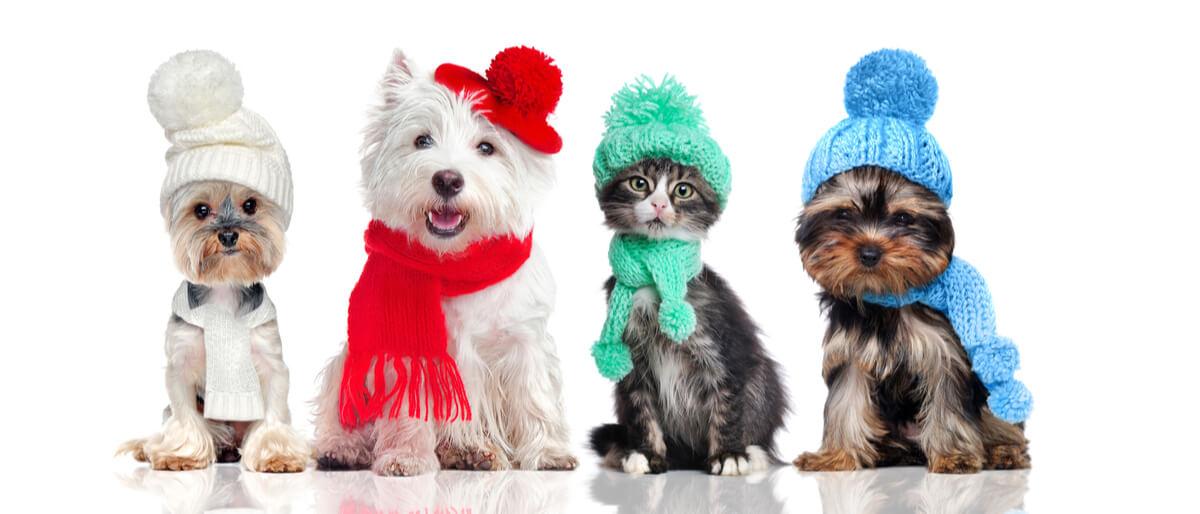 Mascotas con gorro y bufanda.