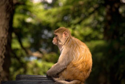 Aislamiento social en animales salvajes