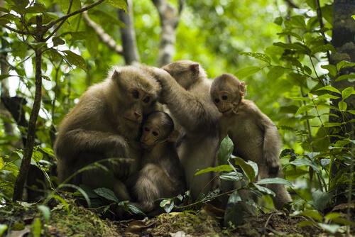 Toma de decisiones en primates: ¿casi humanos?