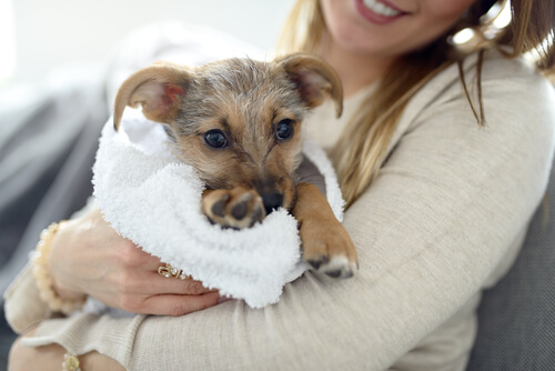 Mujer limpiándole las almohadillas a su perro.
