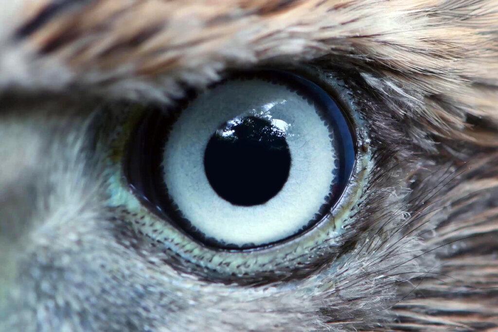 El sentido de la vista: un superpoder del reino animal