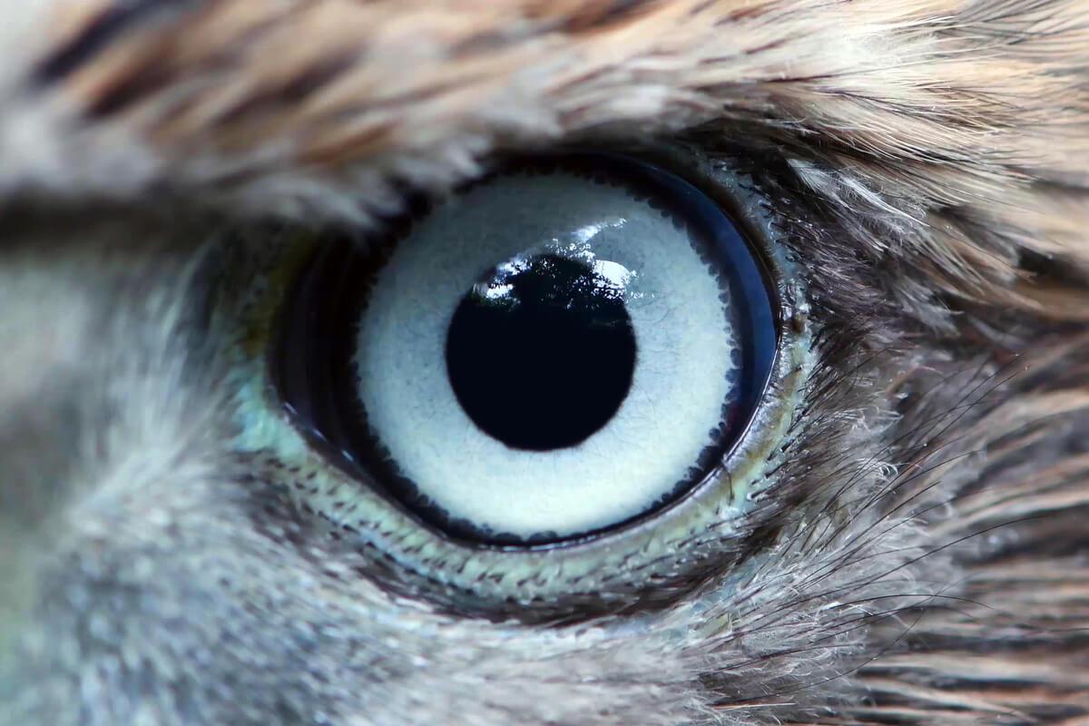 El ojo de un águila.