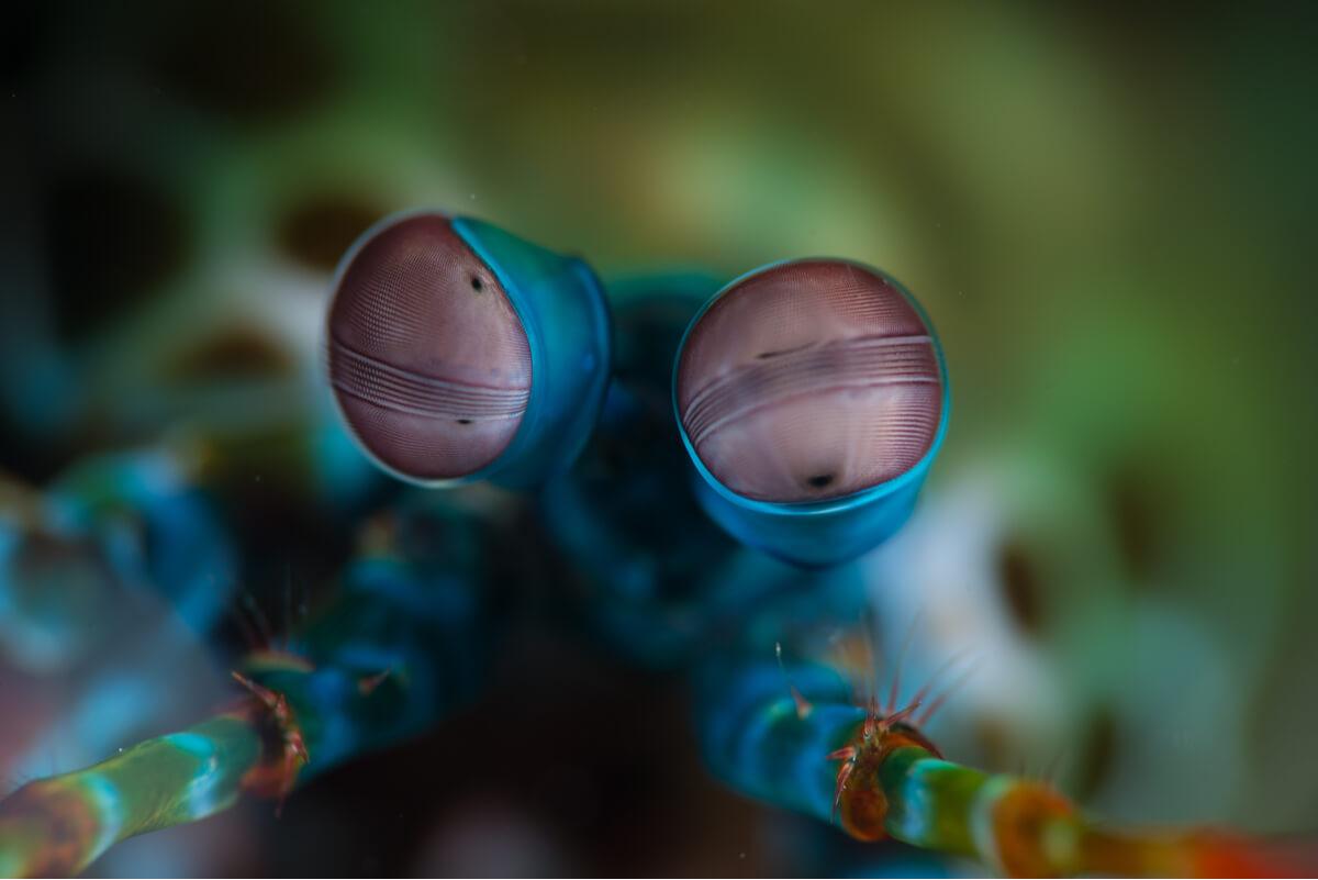 Uno de los ojos más hermosos y raros del reino animal.