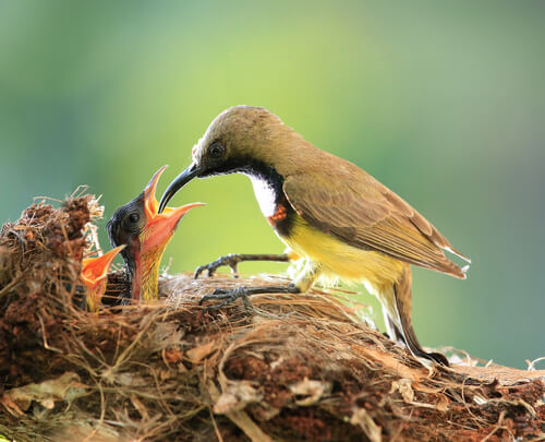 Cuidado parental: pájaro alimentando a sus crías.