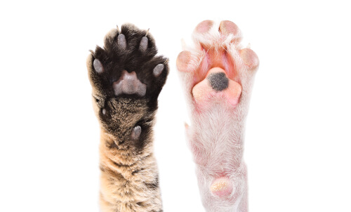 Curiosidades sobre las almohadillas de los animales