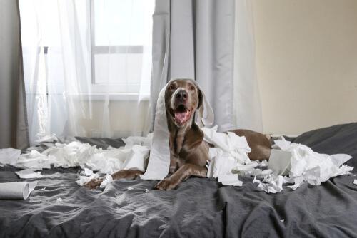 Mascotas hiperactivas: consejos para convivir con ellas