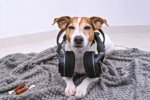 Un perro con auriculares en el interior de una vivienda.