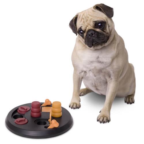 Juegos que ayudan al perro en su estimulación mental