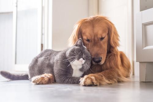 Cardiopatías en mascotas: ¿hay que preocuparse?