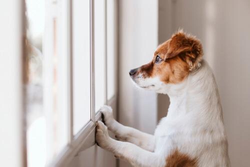 ¿Por qué mi perro lame la pared?