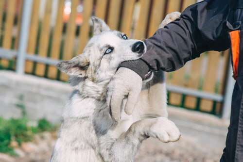 Infecciones por mordeduras de perros