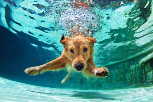 Natación para perros: todo lo que debes saber