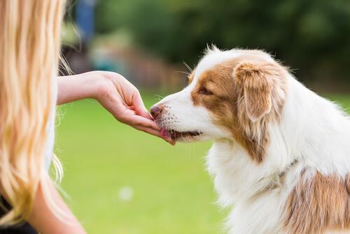 La importancia de las recompensas después del paseo