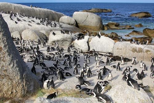 Grupo de pinguinos en la playa.