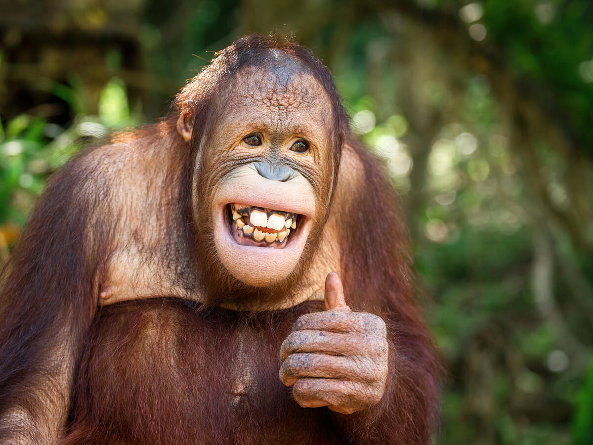 ¿Tienen los animales sentido del humor?