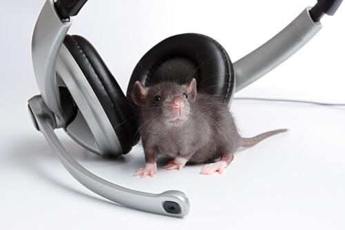 Mozart para roedores.