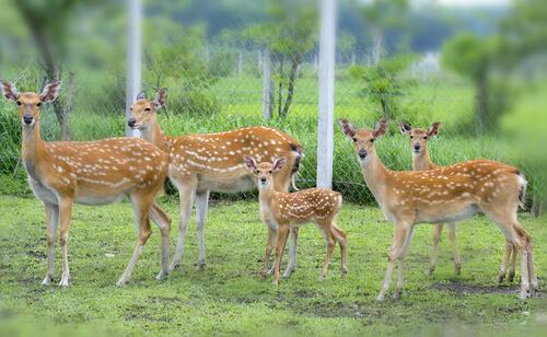 Grupo de ciervos en una reserva.