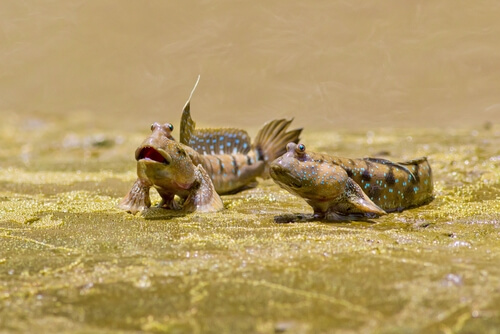 Los pirmeros animales en pisar la tierra