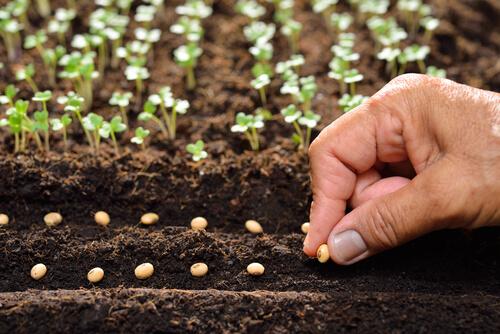Los animales dispersores de semillas son esenciales para los ecosistemas.