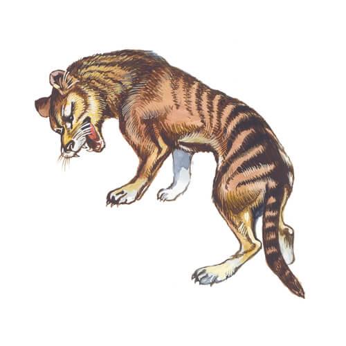 Características del Tigre de Tasmania