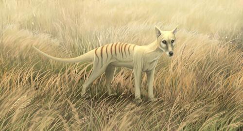 Representación a color de un tigre de Tasmania.