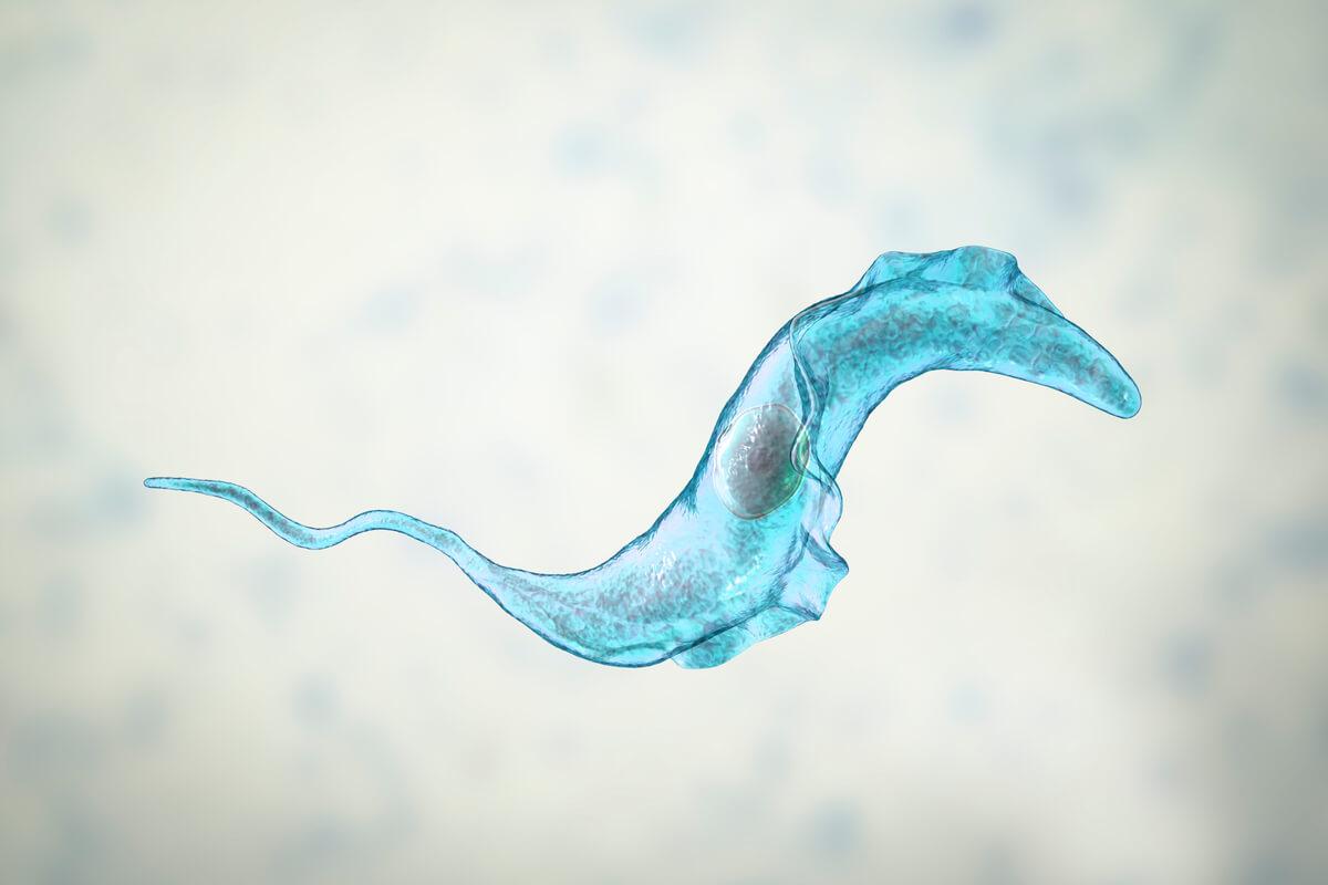 Los tripanosomas son parásitos de los perros.