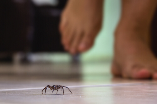 Una araña a punto de ser pisada.