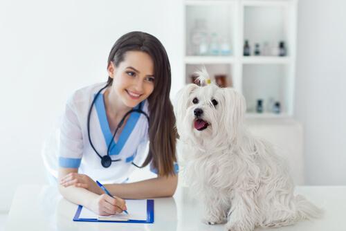 Veterinaria escribiendo receta junto a un perro.