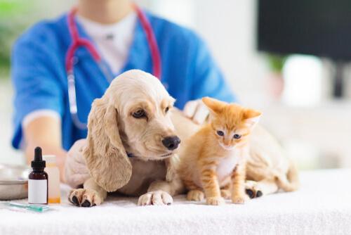 Medicina de urgencias en pequeños animales: el triaje y la evaluación inicial