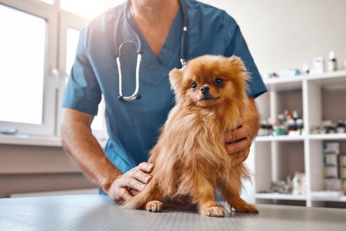Nueva legislación sobre los medicamentos veterinarios