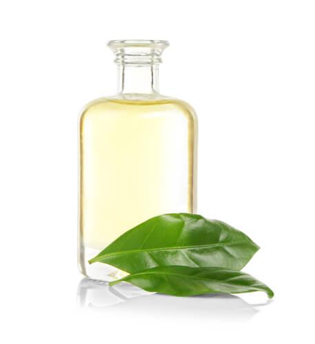 Por qué restringir el aceite del árbol del té en las mascotas