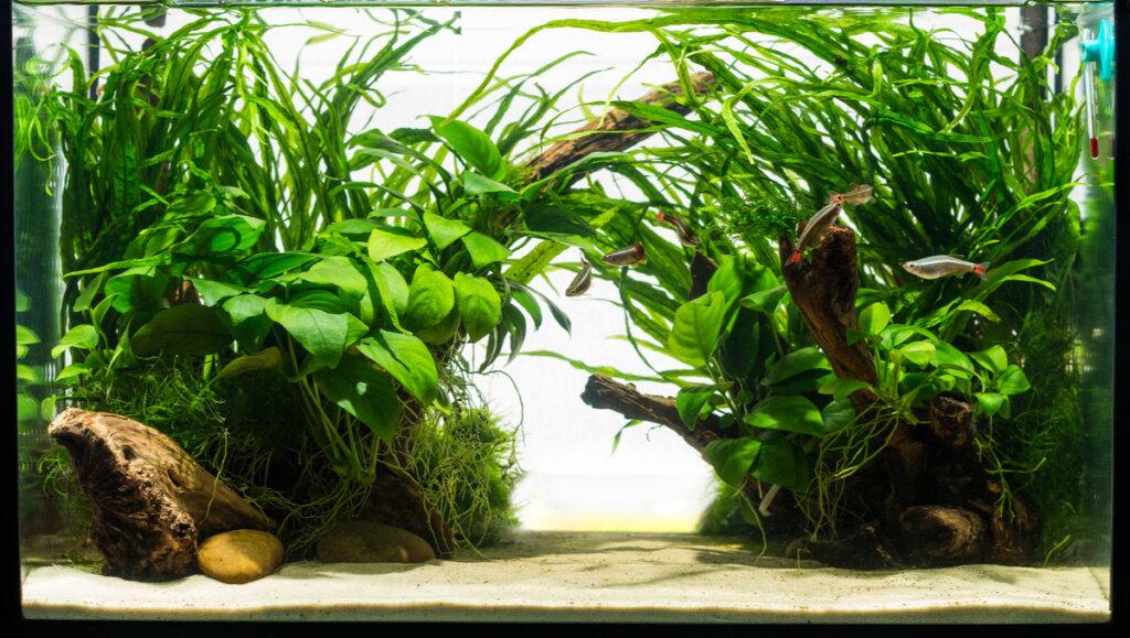 ¿Las plantas ayudan con la limpieza del acuario?