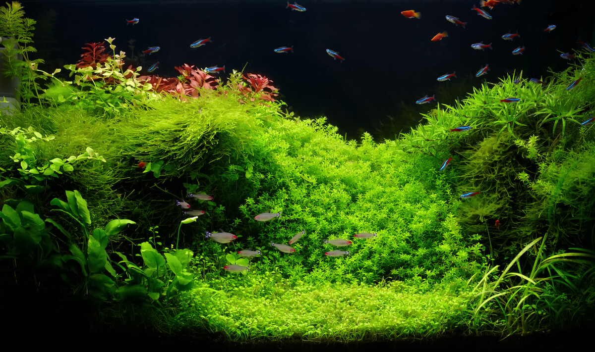 Un acuario plantado.