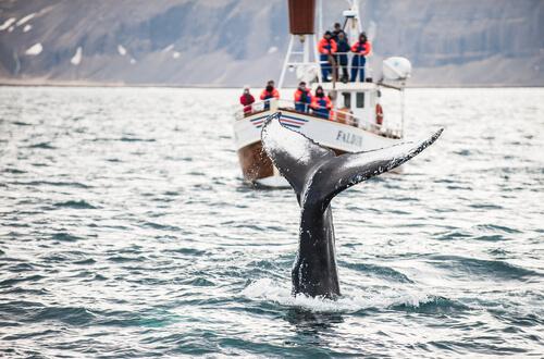 La ballena franca: uno de los mamíferos más adaptados a la vida acuática