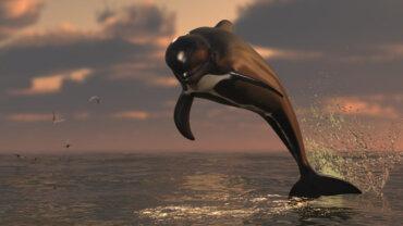 9 datos curiosos de la ballena piloto