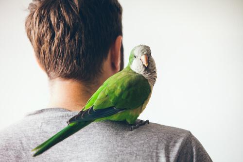Cómo evitar los celos en las mascotas