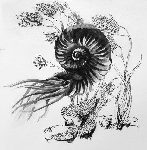Dibujo de un ejemplar de amonites.