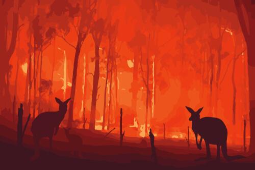 Los efectos de los incendios en Australia