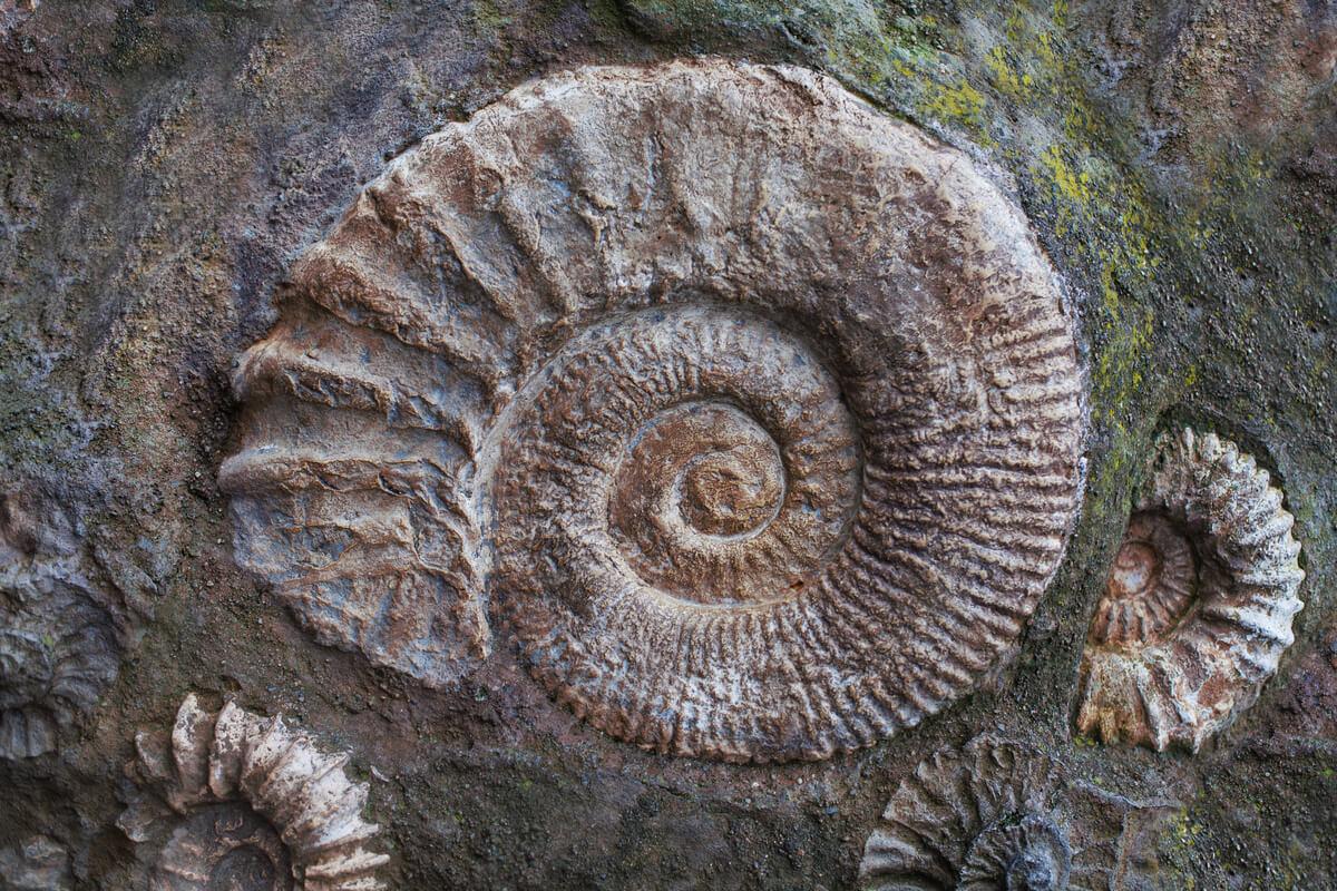 Ejemplo de paleontología.