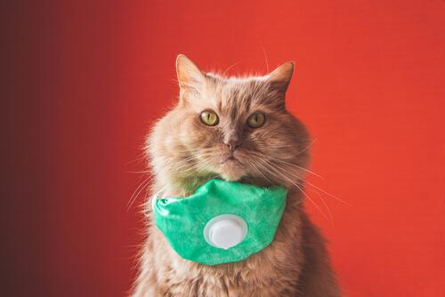 El primer caso de un gato con coronavirus en España