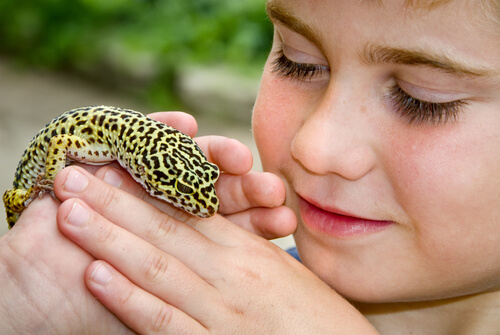 Gecko leopardo: una mascota ideal