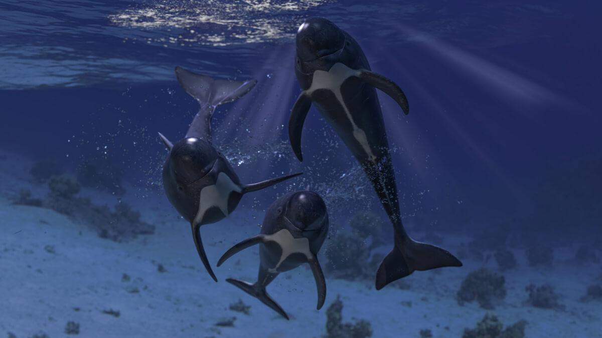 Un grupo de cetáceos mirando a cámara.