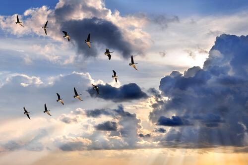 Migración en aves: todo lo que debes saber