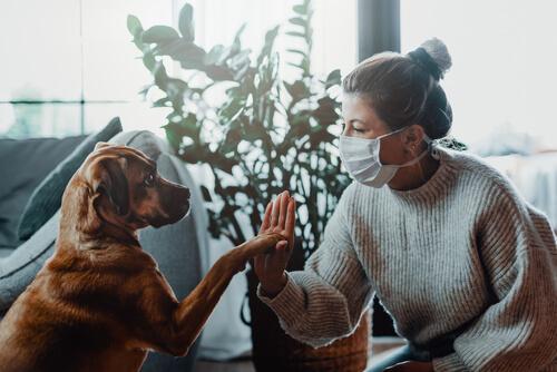 Mujer con mascarilla juega con perro.